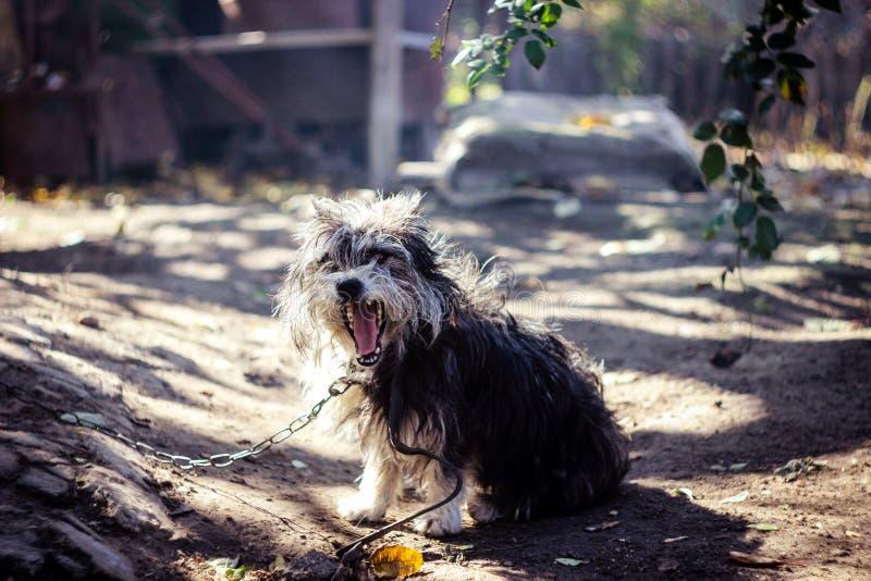 Lantlig hund royaltyfria foton