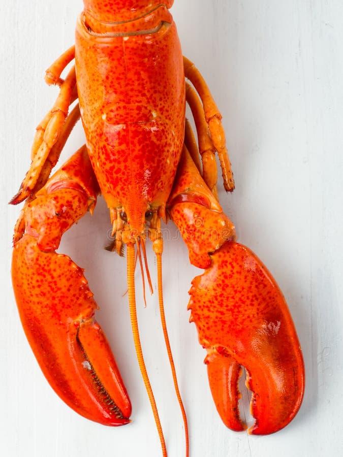 Lantlig lagad mat kokt röd hummer royaltyfri fotografi