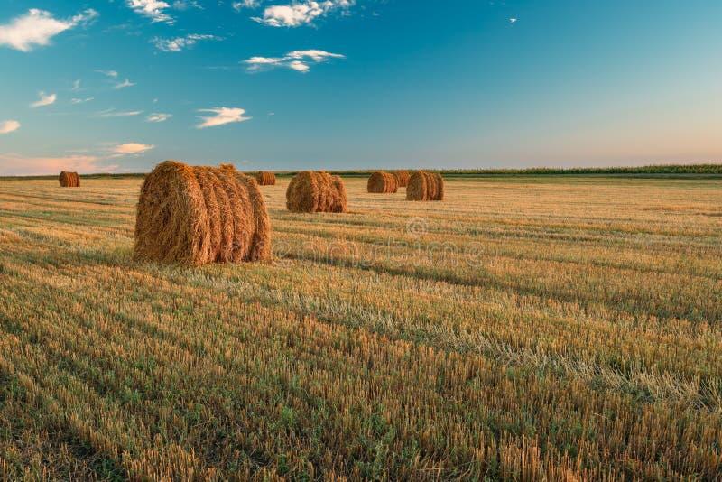 Lantlig landskapfältäng med Hay Bales During Harvest In Su royaltyfria bilder
