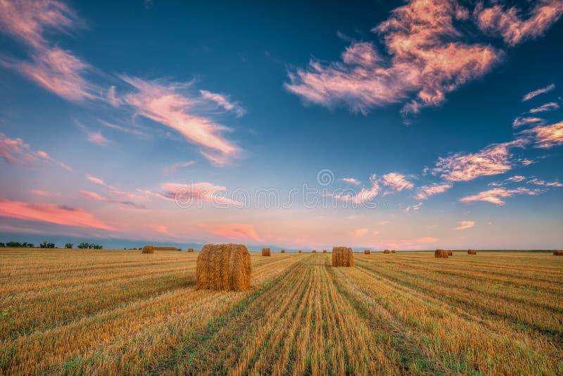 Lantlig landskapfältäng med Hay Bales During Harvest In Su royaltyfri fotografi
