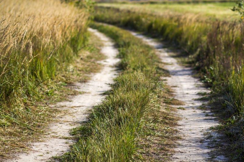 Lantlig landskapplats med grusvägen mellan fält för grönt gräs royaltyfri bild