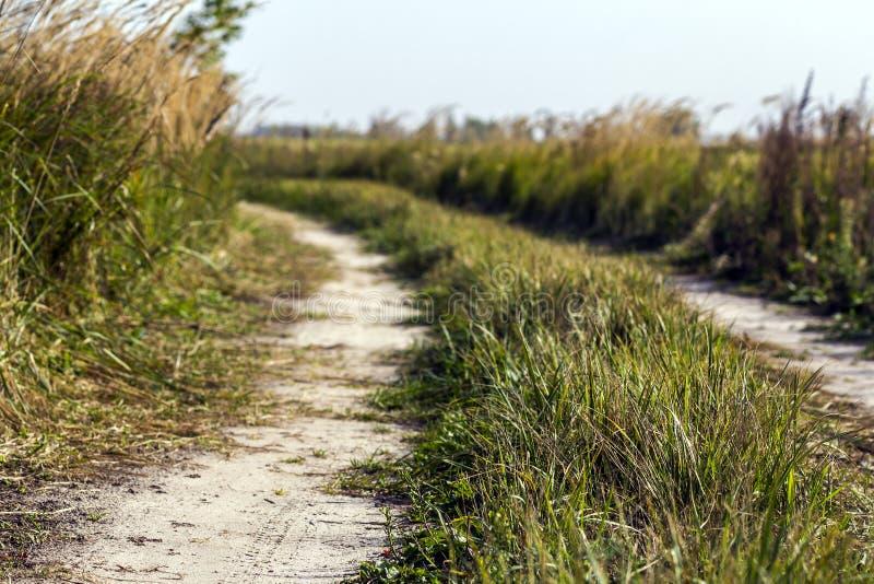 Lantlig landskapplats med grusvägen mellan fält för grönt gräs royaltyfri fotografi