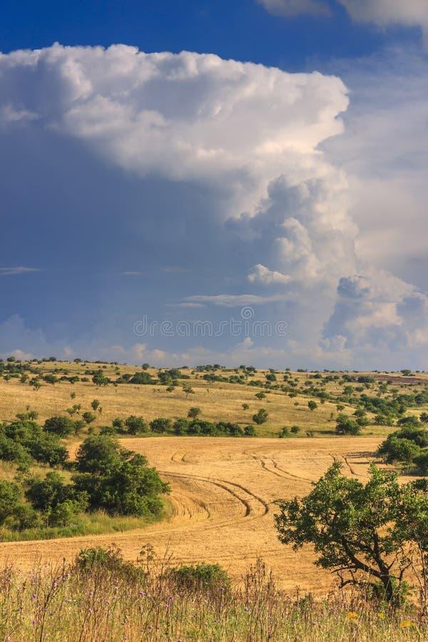 LANTLIG LANDSKAPSOMMAR Alta Murgia National Park: Cornfield som överträffas av moln Apulia Italien Typisk Apulian bygd av Murgi royaltyfria bilder