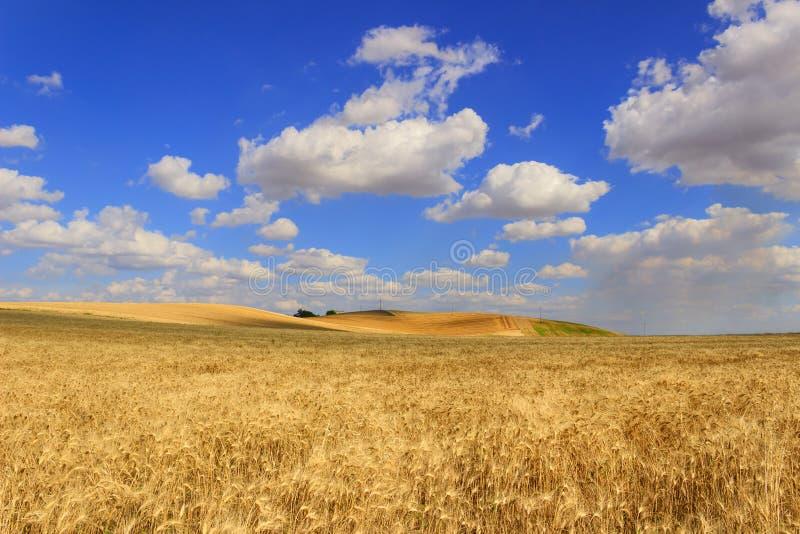 LANTLIG LANDSKAPSOMMAR Bergigt landskap med cornfields italy arkivfoton