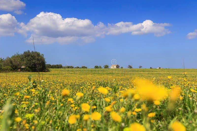 Lantlig landskapvår Sätta in av gula blommor Italien Apulia fotografering för bildbyråer