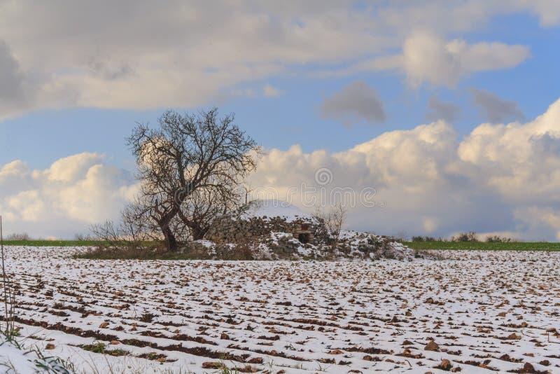 Lantlig landskapvinter: Alta Murgia National Park Apulian jul: trullo med trädet i ett snöig fält Italien Apulia royaltyfri fotografi