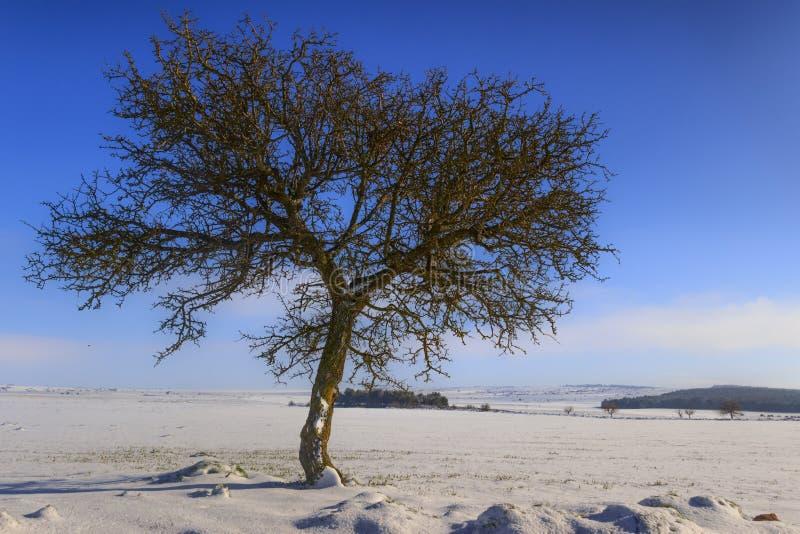 LANTLIG LANDSKAPVINTER Alta Murgia National Park: snöig kullar med det ensamma trädet - Apulia ITALIEN arkivbild