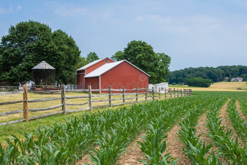 Lantlig landsYork County Pennsylvania jordbruksmark, på en sommardag arkivbilder
