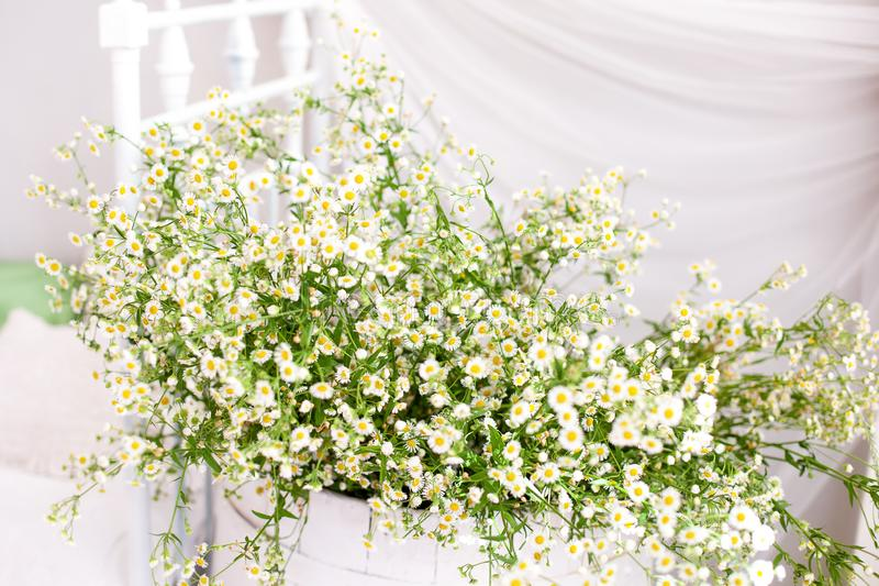 Lantlig och ecostil scandinavia bukett av tusenskönor i ett landshus tusensköna i en vas på en vit bakgrund Aromatherapy summa royaltyfria foton