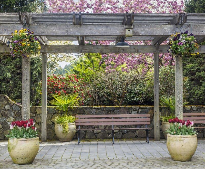 Lantlig pergola med bänken och blomkrukor under att blomstra det körsbärsröda trädet arkivbilder