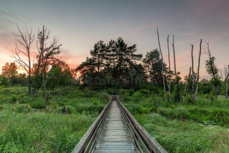 Lantlig plats med frodig grönska och träbron i solnedgångljus royaltyfri bild