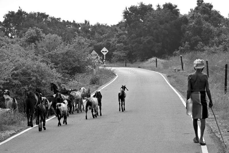Lantlig skönhet i Sri Lanka fotografering för bildbyråer
