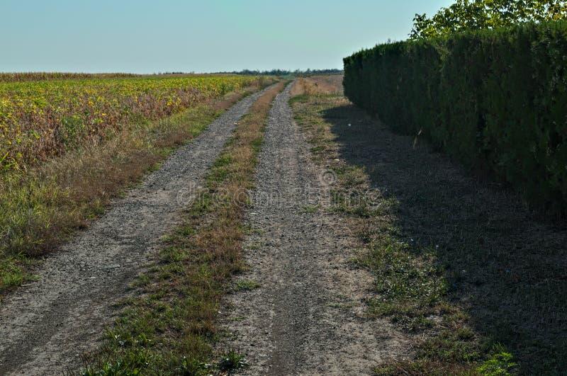 Lantlig smutssidoväg i mitt av jordbruks- fält arkivbild