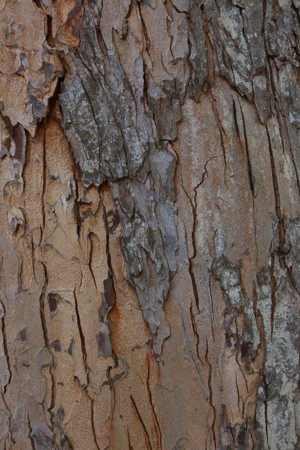 Lantlig stil för rosa wood textur royaltyfri fotografi