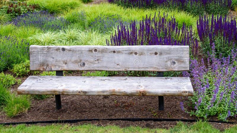 Lantlig träträdgårdbänk som omges av dekorativa gräs och de blommande purpurfärgade blommorna av salviaen och catminten royaltyfri fotografi