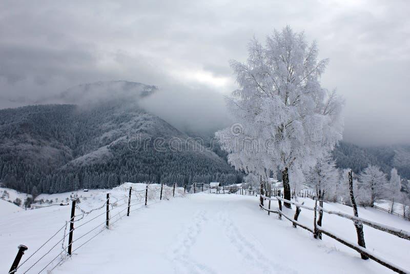 Lantlig väg i bergen under vinter arkivbild
