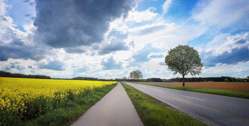 Lantlig väg- och cykelväg bredvid canolafält arkivfoto