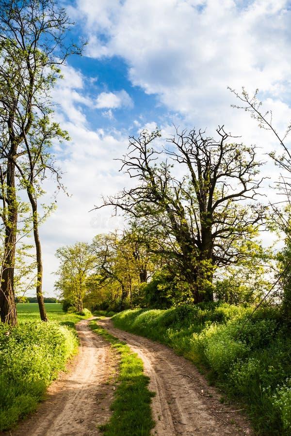 Lantlig väg som fodras av träd fotografering för bildbyråer
