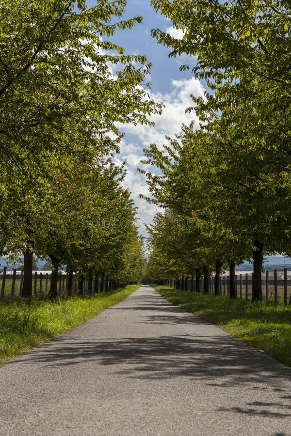 Lantlig väg som fodras med lövrika gröna träd royaltyfri bild