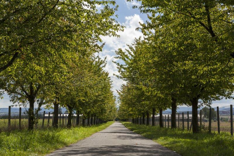 Lantlig väg som fodras med lövrika gröna träd royaltyfria bilder