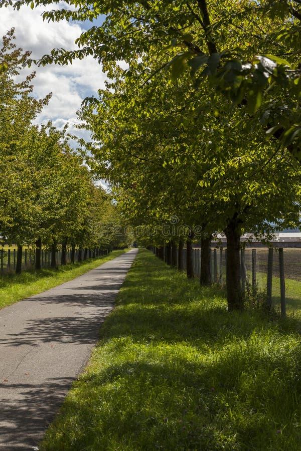 Lantlig väg som fodras med lövrika gröna träd royaltyfri foto