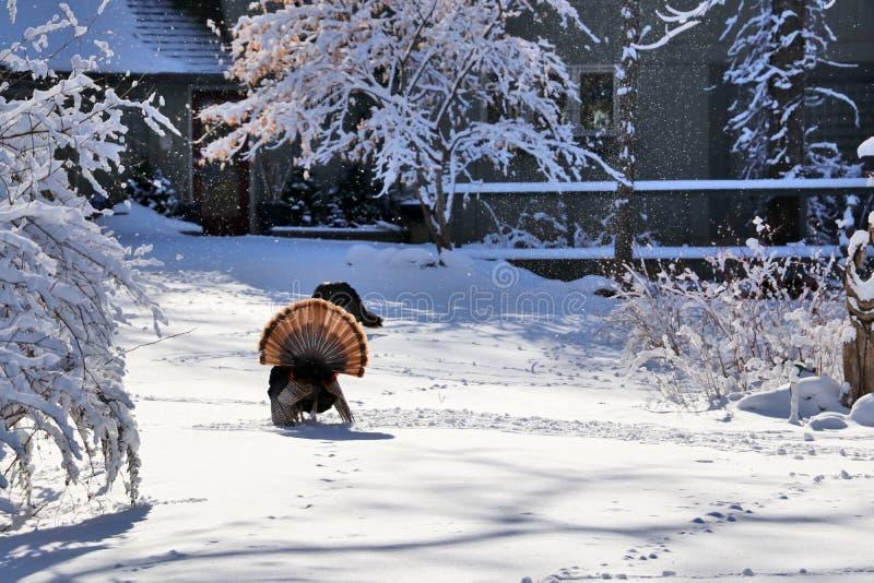 lantlig vinter för härlig liggande royaltyfri bild