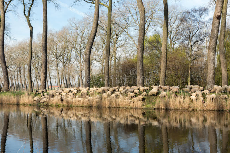 Lantliga Flanders i Belgien royaltyfria foton