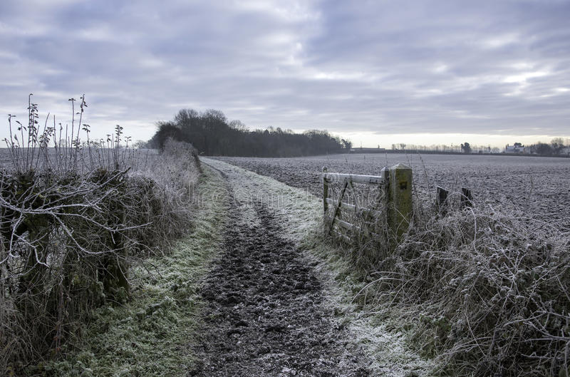 Lantliga Frosty Pathway arkivbild