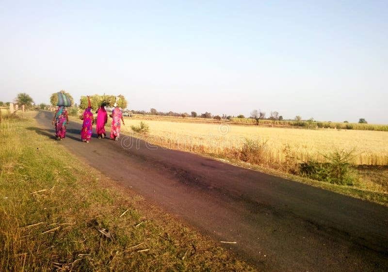 Lantliga indiska grässkördemaskinkvinnor som hem går tillbaka arkivbild