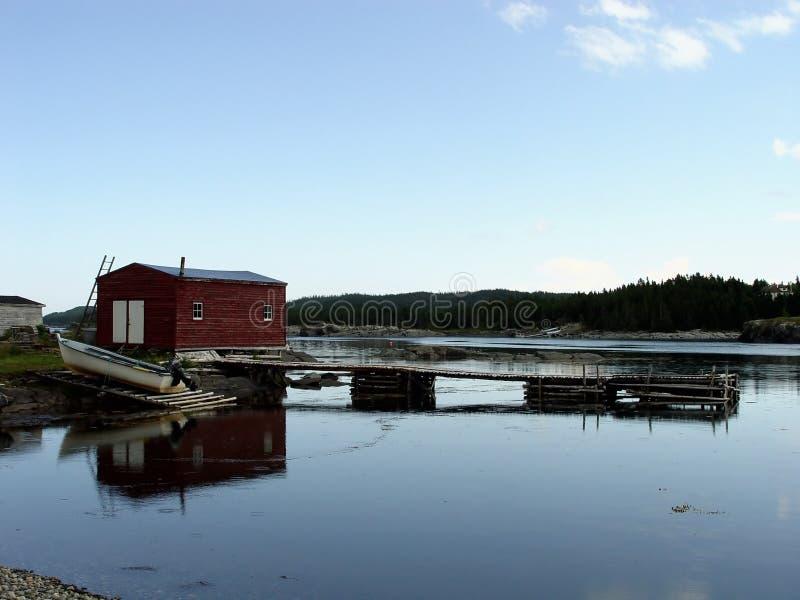 Lantliga Newfoundland Royaltyfria Bilder