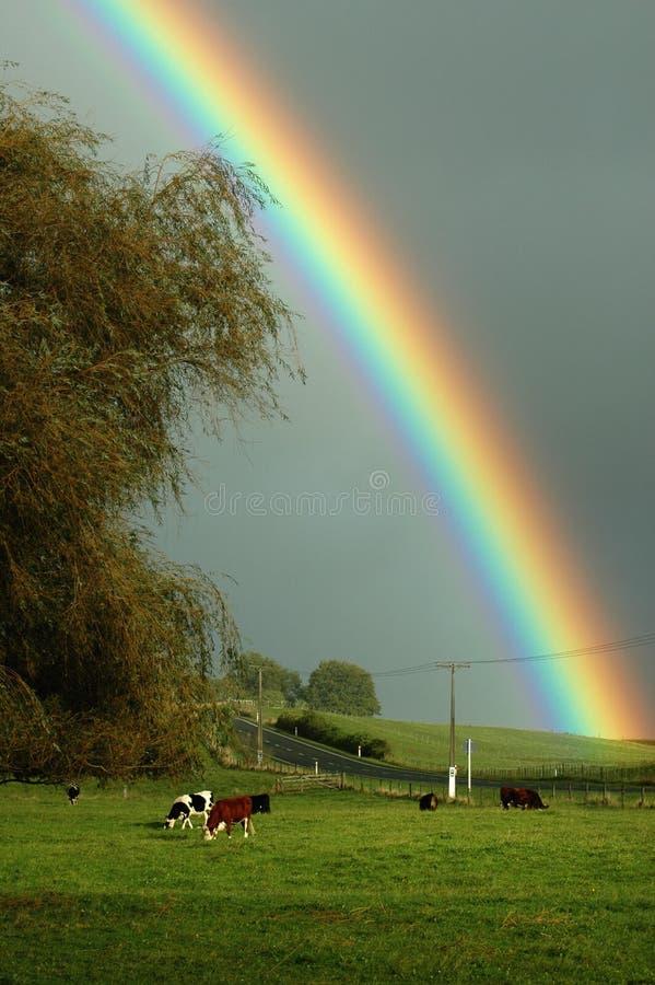 lantliga regnbågar royaltyfria foton