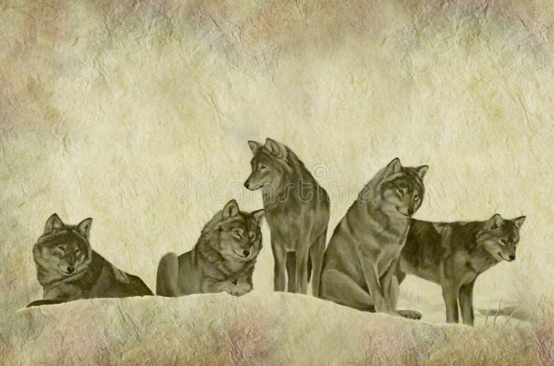 Lantliga Wolf Pack Parchment stock illustrationer