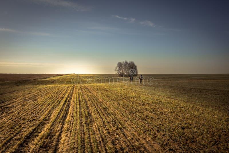 Lantligt åkerbrukt fält på soluppgång med folk som går in i avstånd i framåt landskap för bygd för horisont för riktningssoluppgå arkivfoto