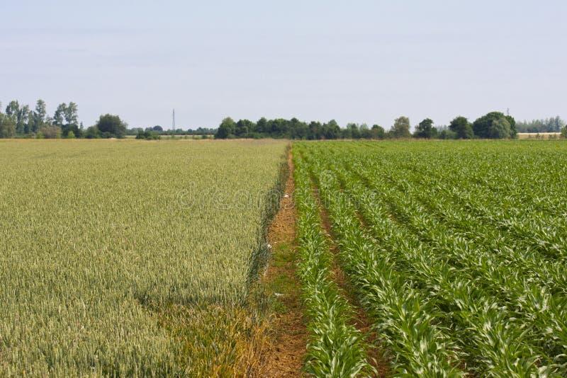 Lantligt fält i Frankrike arkivfoto