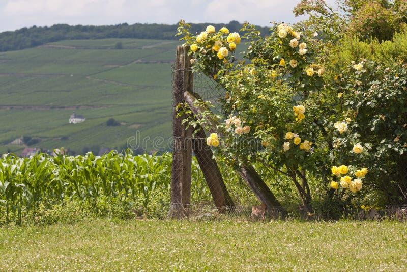 Lantligt fält i Frankrike med ett staket arkivfoton