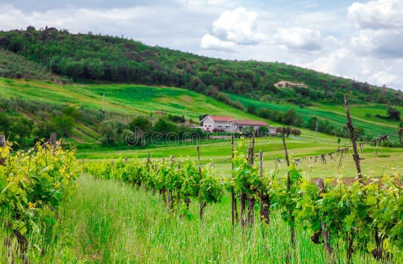 Lantligt hus på kullen bland vingårdar royaltyfri fotografi