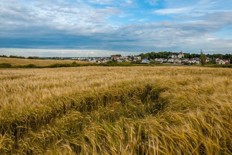 Lantligt jordbruks- landskap rågfält i förgrunden framme av byn arkivbild