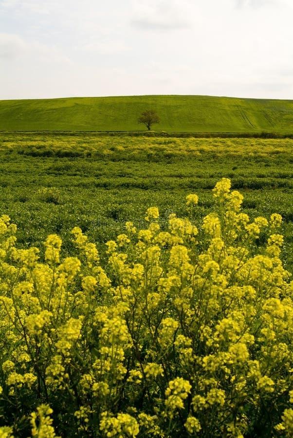 Lantligt landskap, Apulia, Italien - Immagine royaltyfria foton