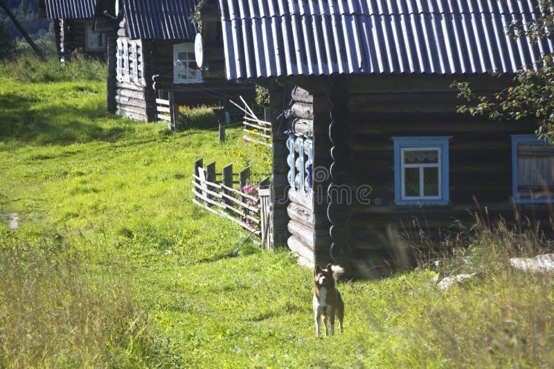 Lantligt landskap av Kenozero sjön, Ryssland fotografering för bildbyråer