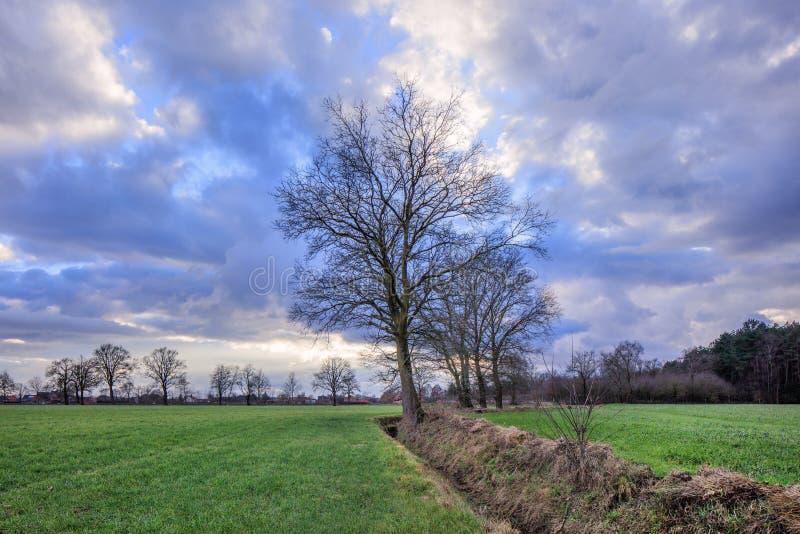 Lantligt landskap, fält med träd nära ett dike med dramatiska moln på skymning, Weelde, Belgien royaltyfri fotografi