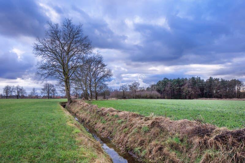Lantligt landskap, fält med träd nära ett dike med dramatiska moln på skymning, Weelde, Flanders, Belgien royaltyfri bild