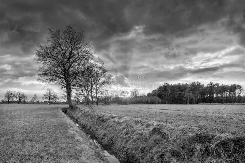 Lantligt landskap, fält med träd nära ett dike och färgrik solnedgång med dramatiska moln, Weelde, Belgien royaltyfri fotografi