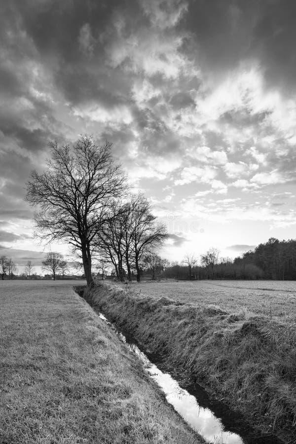Lantligt landskap, fält med träd nära ett dike och solnedgång med dramatiska moln, Weelde, Belgien royaltyfri fotografi