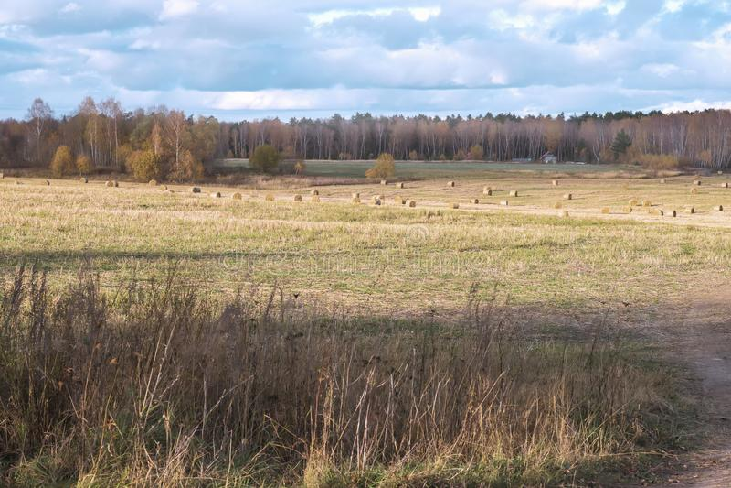 Lantligt landskap för höst som sluttar ängen, fält med runda sugrörbaler efter skörd på bakgrund av den soliga dagen för skog arkivbild