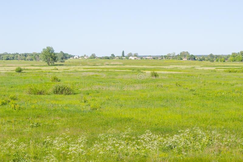 Lantligt landskap för by med gröna fält- och landshus, sommaräng, gräs på en beta, fält, naturbakgrund royaltyfri bild