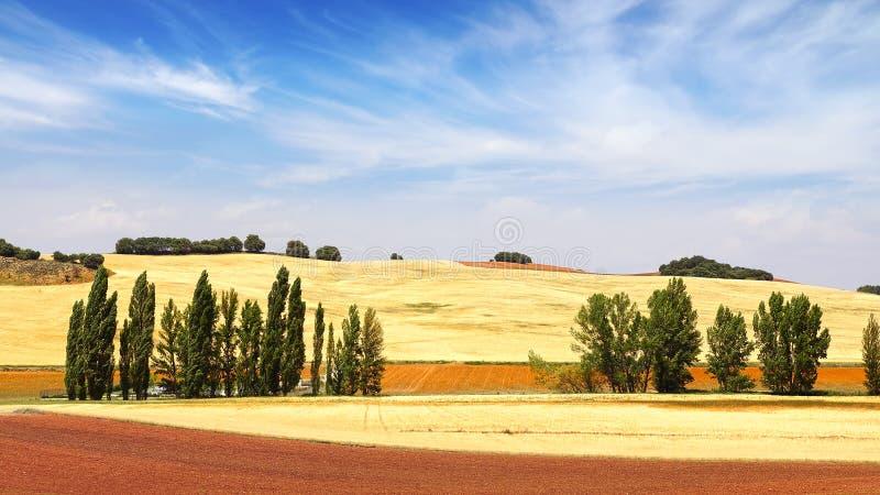 Lantligt landskap för pittoresk natur med fält arkivfoton