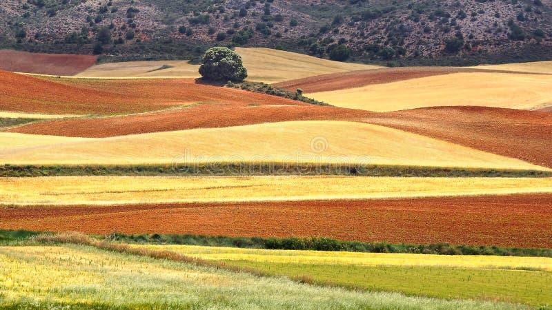 Lantligt landskap för pittoresk natur med fält royaltyfria bilder