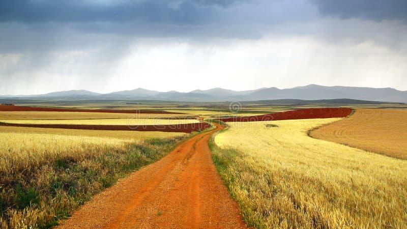 Lantligt landskap för pittoresk natur med fält royaltyfri foto