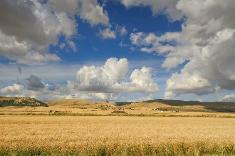 Lantligt landskap för sommar: Alta Murgia National Park Bergigt fält med cornfields Italien Apulia royaltyfri foto