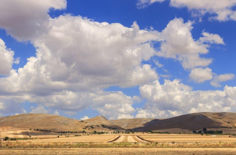 Lantligt landskap för sommar: Alta Murgia National Park Bergigt fält med skördcornfields Italien Apulia royaltyfri bild
